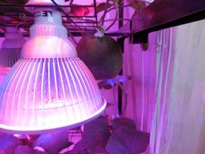 完全LEDメロン栽培1